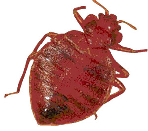 Bed Bug Removal Eliminate Them Today Experienced Qualified