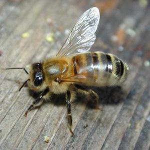 bee control